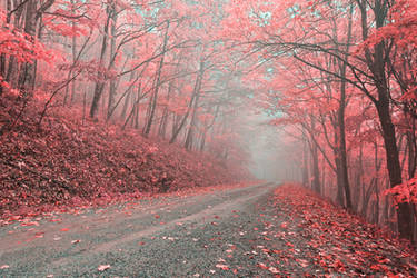 Misty Forest Road - Tickle Me Pink by boldfrontiers