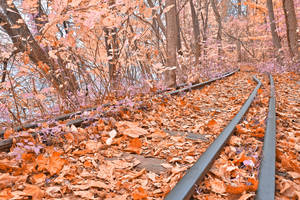 Abandoned Autumn Railroad - Fantasy Express by boldfrontiers