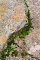 Yin Yang Moss Stone by boldfrontiers