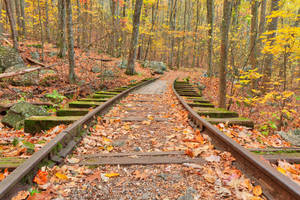 Autumn Logging Railroad by boldfrontiers
