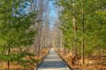 Jesup Boardwalk Trail