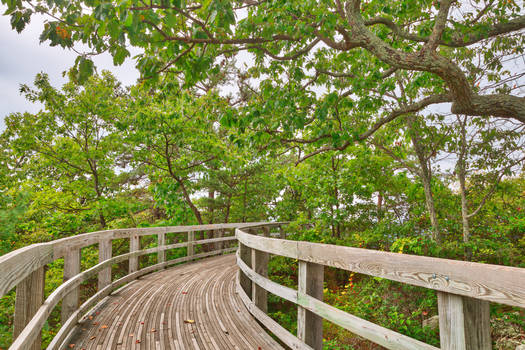 Boardwalk Storybook Trail II