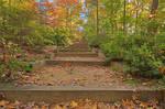 Autumn Arboretum Stairway