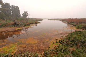 Misty Assateague Island Marsh by boldfrontiers