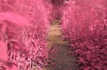 Windy Goose Creek Trail - Tickle Me Pink