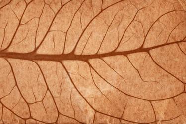Vintage Sepia Leaf Veins