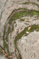 Mossy Stone Curves by boldfrontiers