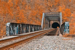 Graffiti Train Track - Amber Autumn