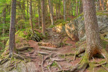 Green Mountain Forest Trail by boldfrontiers