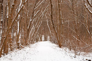 Winter Forest Tipi Trail by boldfrontiers