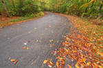 Winding Autumn Forest Road