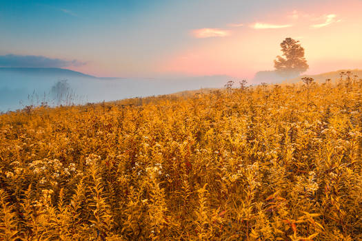 Misty Canaan Valley Sunrise - Gold Pastel Fantasy