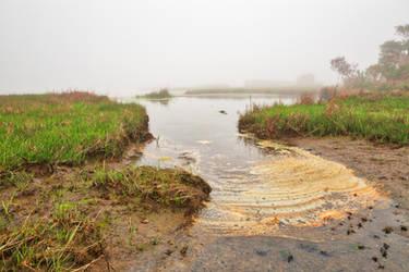 Misty Foam Marsh