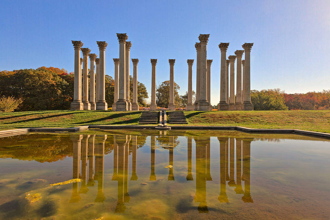 Capitol Arboretum Columns III (freebie) by boldfrontiers