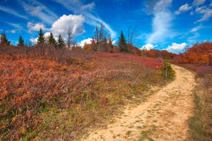 Winding Autumn Dolly Sods Trail by boldfrontiers