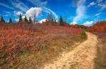 Winding Autumn Dolly Sods Trail