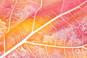 Pastel Leaf Decay by boldfrontiers
