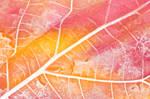 Pastel Leaf Decay