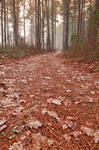 Frosty Mist Trail