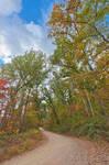 Winding Autumn Forest Road - Green Ridge