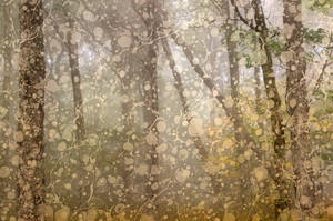 Marbled Mist Forest - Spruce Knob by boldfrontiers