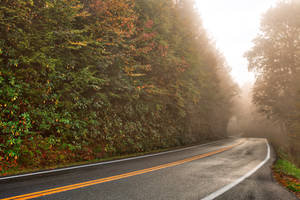 Slick Mist Forest Road by boldfrontiers