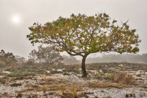 Glowing Mist of Assateague Island by boldfrontiers