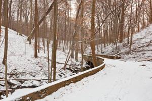 Rustic Winter Bridge Trail by boldfrontiers