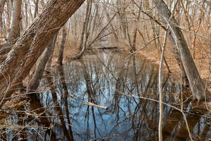 Sycamore Landing Creek (freebie) by boldfrontiers