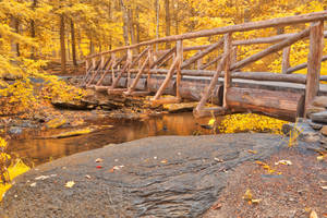 Golden Autumn Log Bridge by boldfrontiers