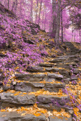 Gold Lavender Staircase by boldfrontiers