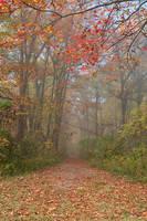 Misty Autumn Trail - Ferry Grove (freebie) by boldfrontiers