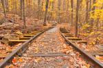 Gold Autumn Logging Railroad