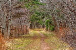 Cavendish Forest Trail by boldfrontiers