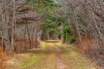 Cavendish Forest Trail