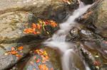 Glen Artney Stream IV