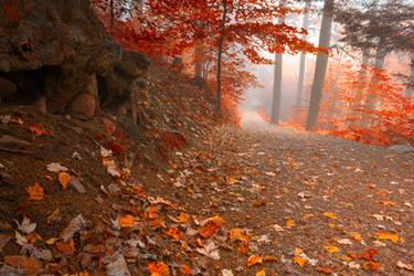 Misty Autumn Wonderland Trail