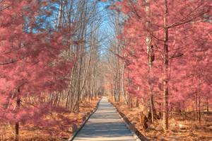 Jesup Boardwalk Trail - Tickle Me Pink by boldfrontiers