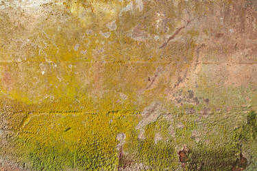 Organic Wall Decay by boldfrontiers