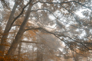 Misty Forest Branchscape - Sepia Euphoria by boldfrontiers