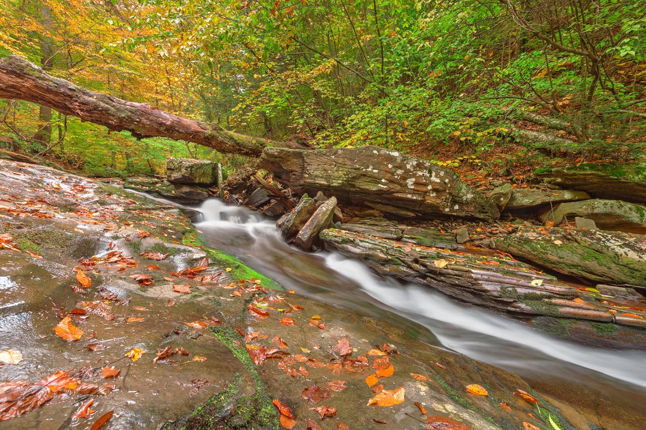 Ricketts Glen Autumn Stream by somadjinn