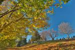 Leaning Fall Cemetery (freebie)