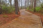 Assateague Boardwalk Trail