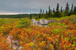 Cloudy Dolly Sods