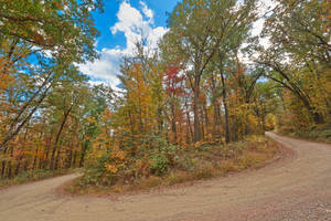 Autumn Horseshoe Forest Road by boldfrontiers