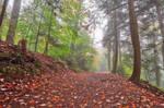 Misty Autumn Trail - Ricketts Glen