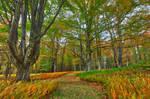 Autumn Fern Trail - Canaan Valley