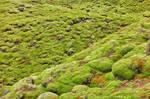 Iceland Rock Moss
