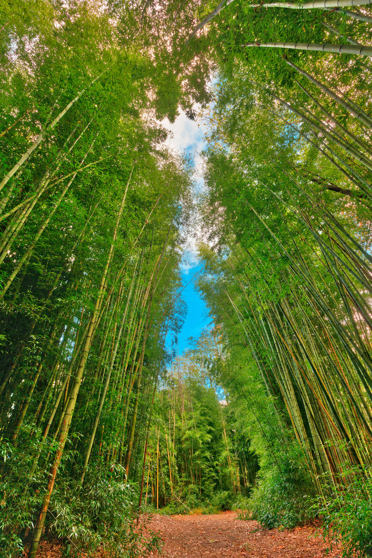 Bamboo Keyhole Forest by somadjinn