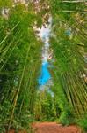 Bamboo Keyhole Forest